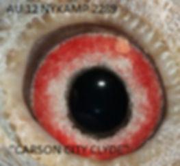 Carson City Clyde Eyeshot.jpg