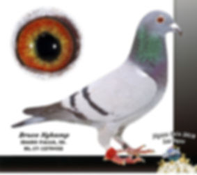 Pigeon Gala 2018 2.jpg