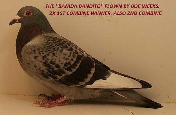 Banida Bandito.jpg