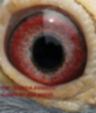 Banida Bandito Eye Shot.jpg