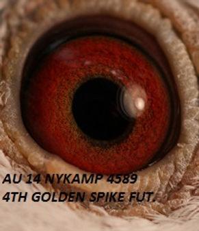 Golden Spike Hen Eyeshot.jpg
