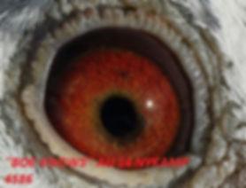 Boe Knows Eyeshot.jpg