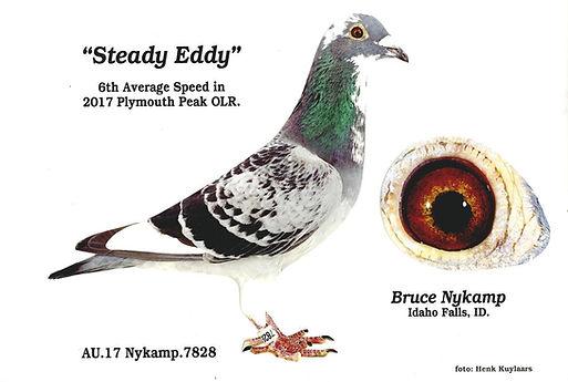 Steady Eddy.jpg