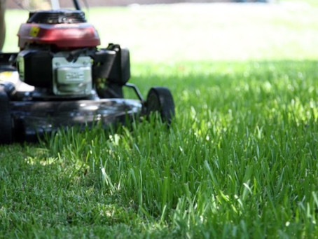 Freshly Cut Lawn Saves Local Man's Sanity.