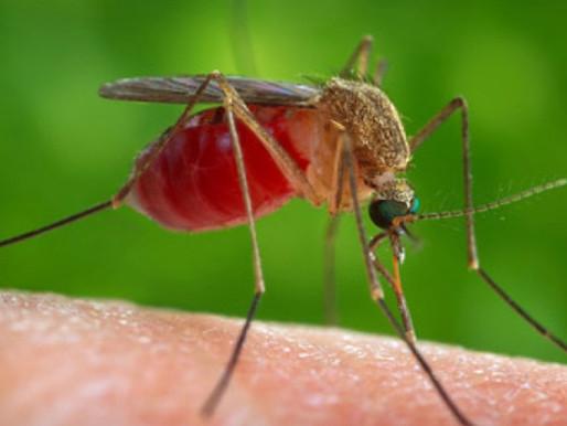 Zouden insecten covid-19 verspreiden?