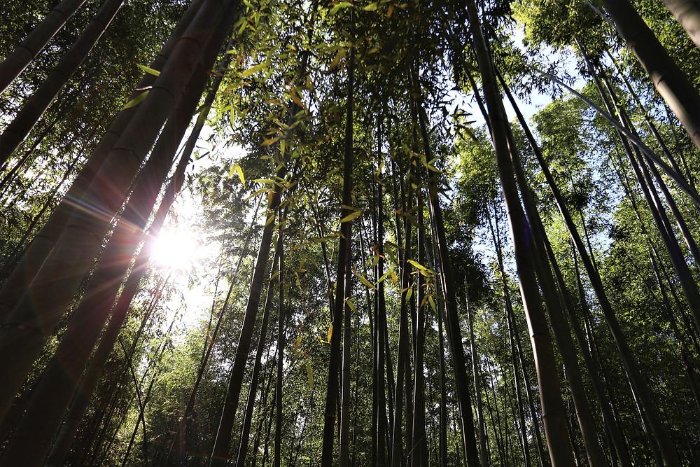 Kyoto Japon retraite spirituelle meditation pour seminaire et formation autour du bien-être gestion de stress energie et resilience cours oenologie