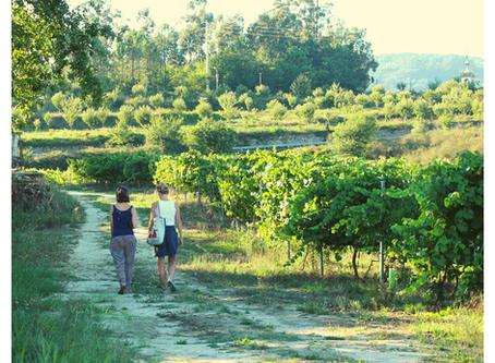 2 familles subliment la région du Vinho Verde : dionysisme & vin!