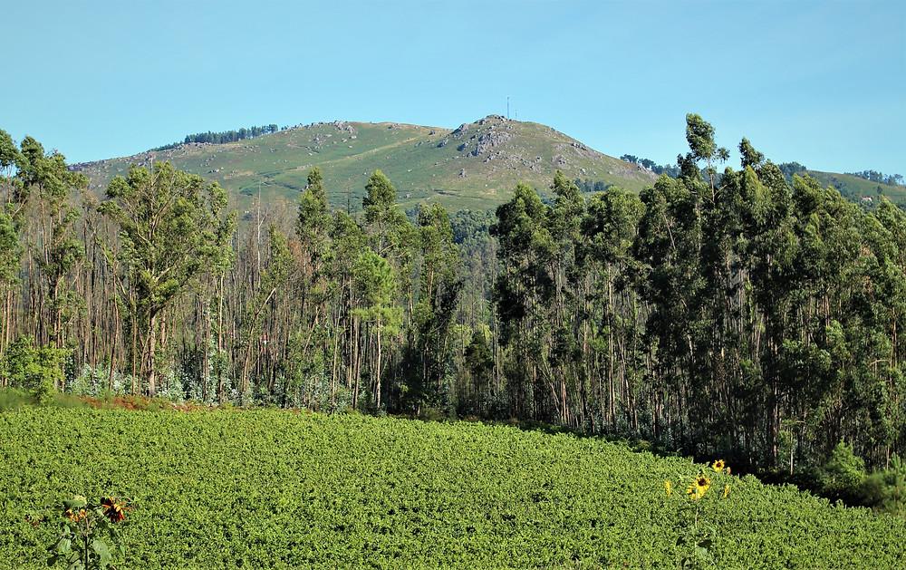 Vinho Verde Vin Portugal Degustation