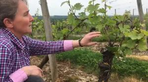 domaine Chateau Piéguë Loire, lieu de seminaire team building degustation de vin d'Anjou et de Loire à Rochefort sur Loire