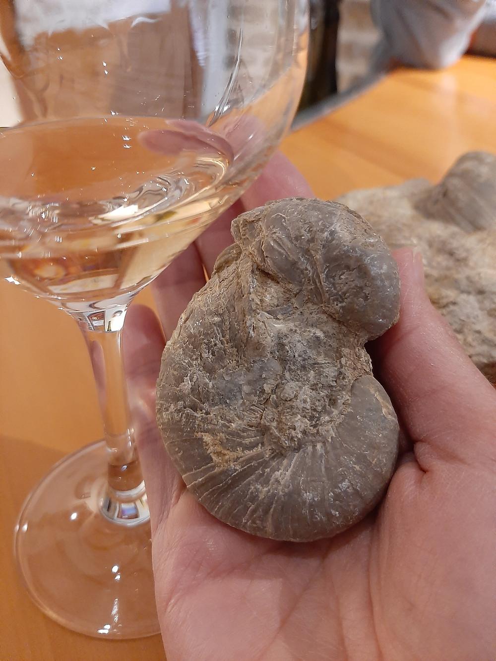 wine consultancy consultance oenologie dégustation tasting ecrivain journaliste formation formatrice La revue du vin de france academy jura vin arbois chateau chalon