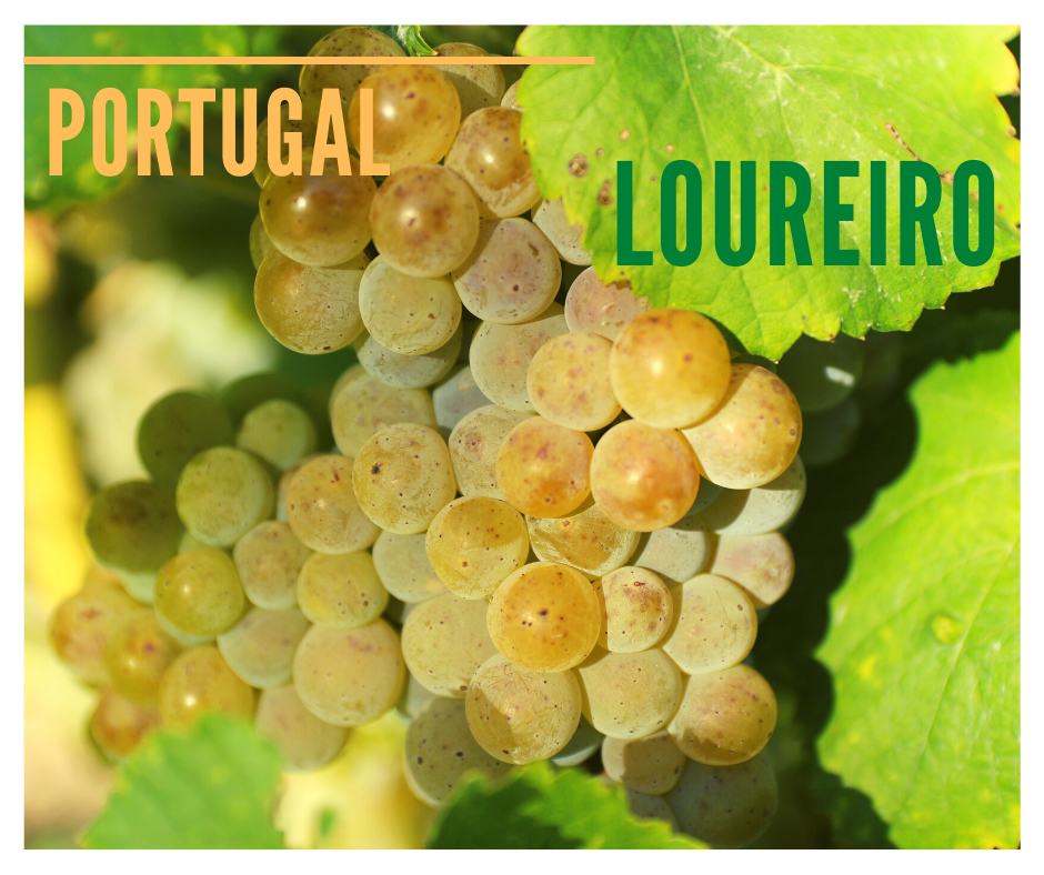 loureiro grappe grape raisin vin Portugal decouverte degustation