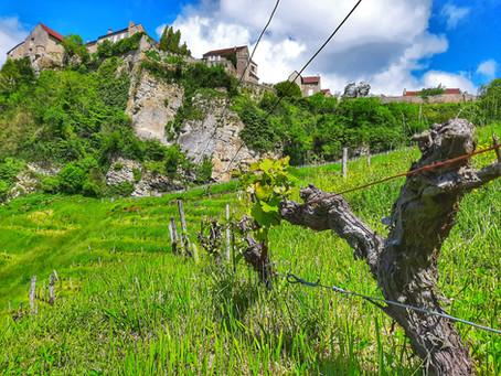 """Le Jura """"vert"""": 3 familles vigneronnes au métier passion !"""
