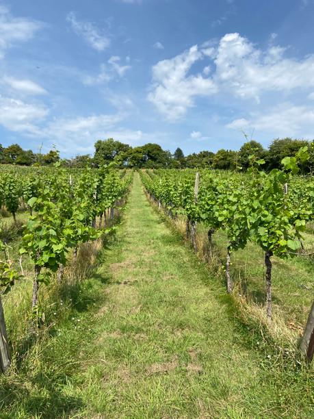 Another Vineyard Tour