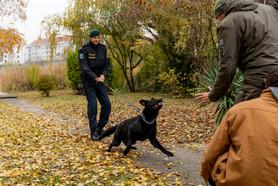 Hundestaffel I Polizeifotos I Cemera Photography