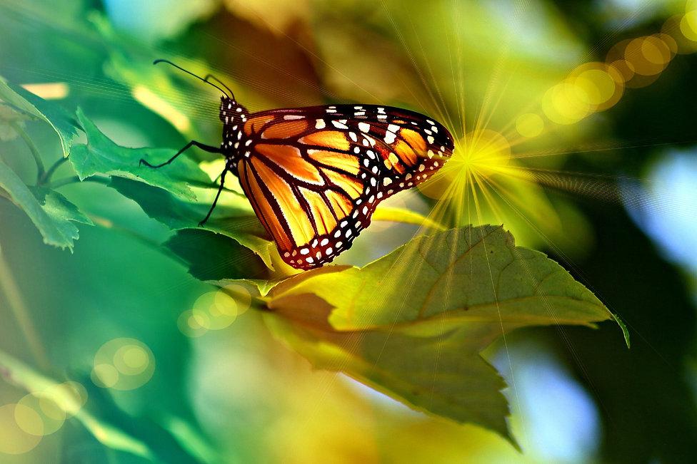 monarch-4335443_1920.jpg