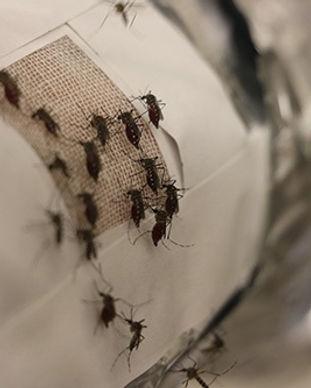 Graphene-mosquito-prevention.jpg