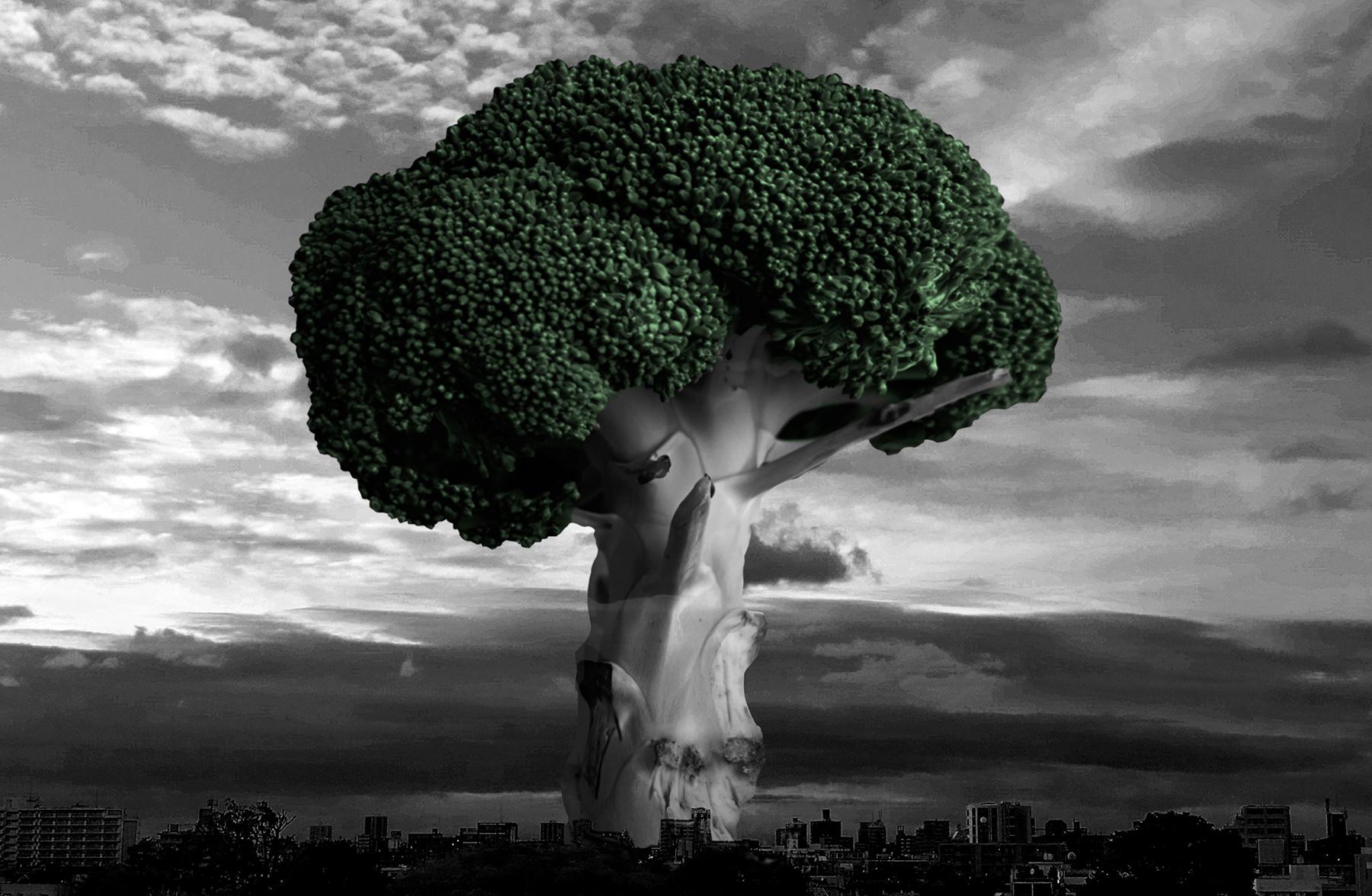 Broccoli's dream