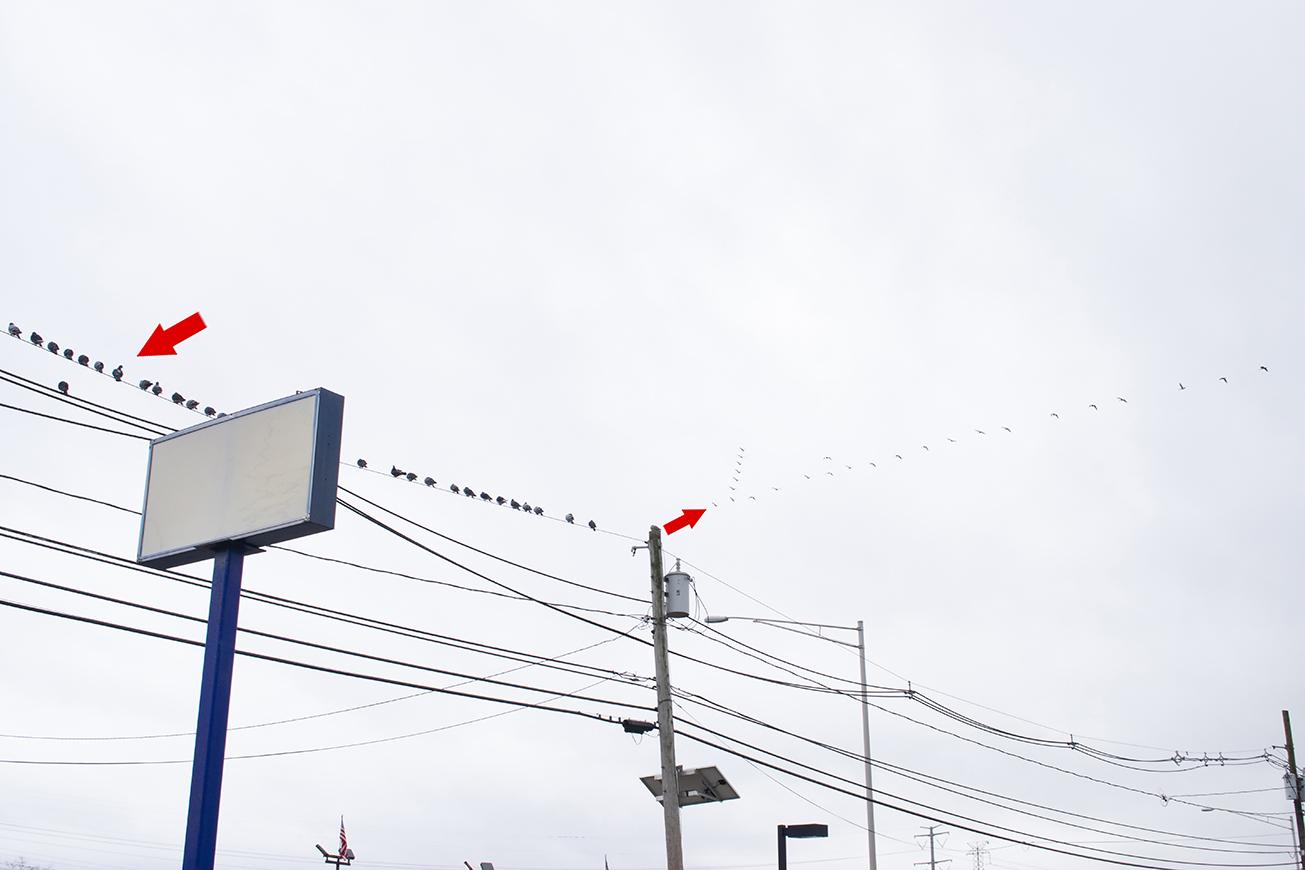 about bird