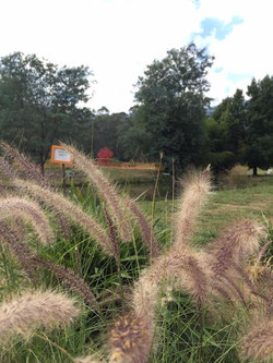 Trout & Salmon Farm Harrietville