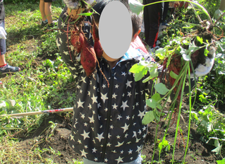 園内で芋掘り