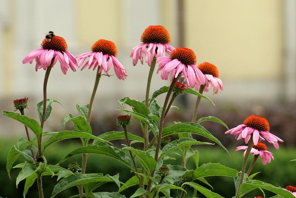 plante animaux phytothérapie