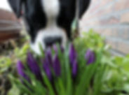 dog-1217777_960_720.jpg