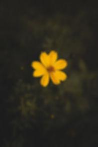 pexels-photo-1212487.jpeg