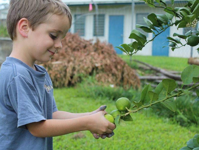 Amaziah picking lemons