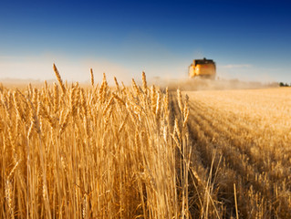 Harvest Prayers