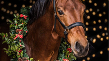 Merry Christmas from Benbrook Stables!