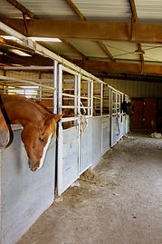 Benbrook Stables Horse Boarding Fort Worth Tx