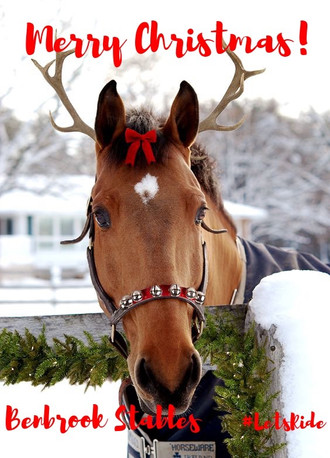 Give the Gift of Horses - Gift Certificates from Benbrook Stables