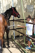 Horsesback Riding Lessons Fort Worth Texas Benbrook Stables