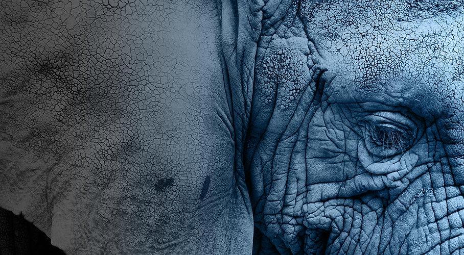 elefante-blu.jpg