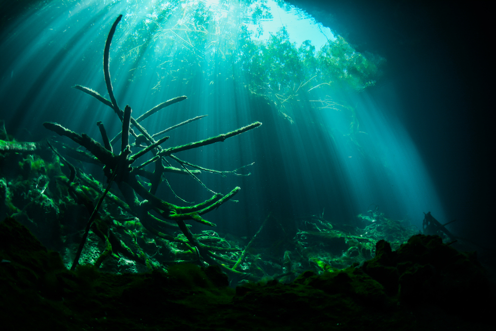 Sunlight beaming into a Cenote
