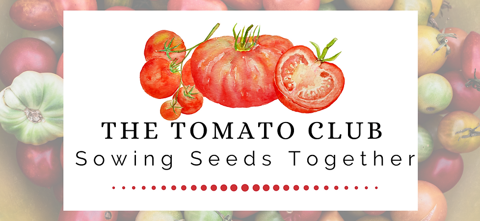 The Tomato Club Joes Page banner.png