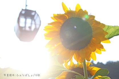 向日葵とゴンドラ.jpg