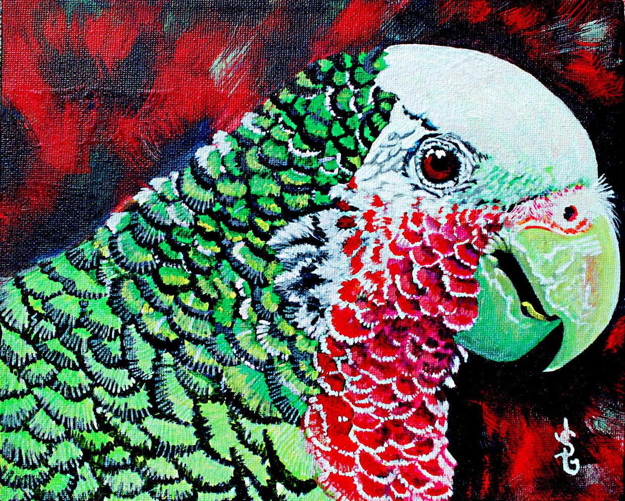 Le perroquet : 45$