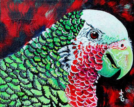 Le perroquet : 96$