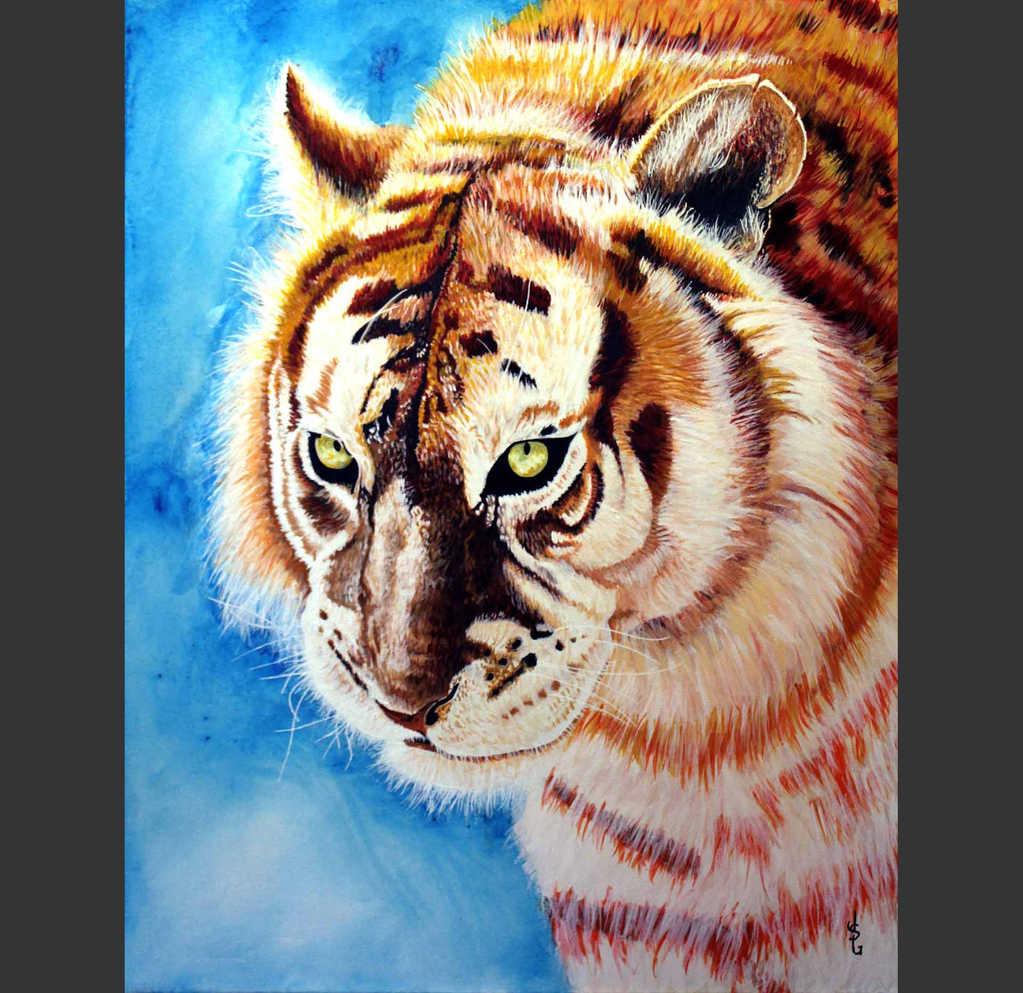 Le tigre : 320$