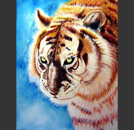 Le tigre : 740$