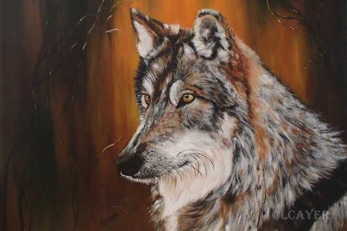 Loup alpha: 310$