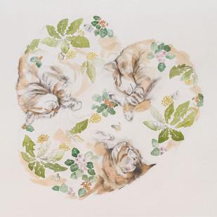 Rêve de chat II printemps
