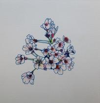 桜 Cerisier.03