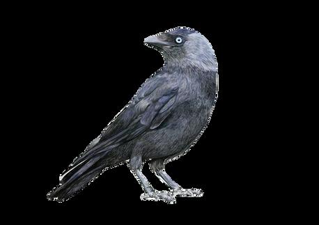 A-Z of birds