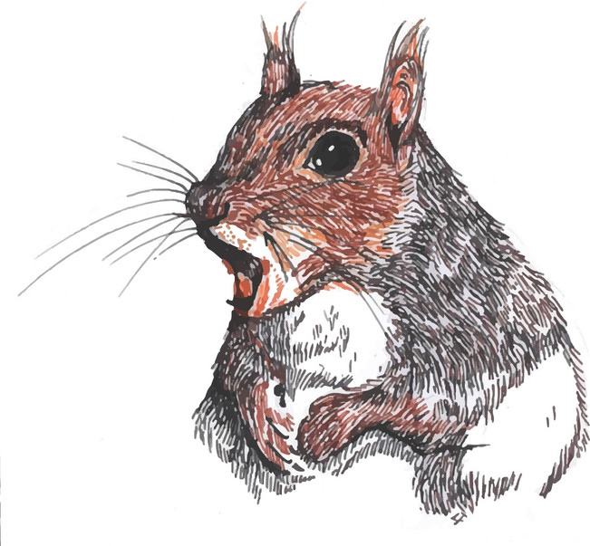 Character sketch: Mrs Squirrel