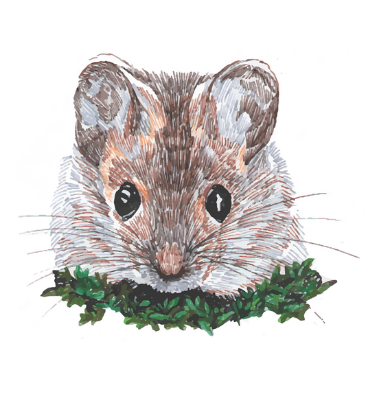 Character sketch: Mildred mouse