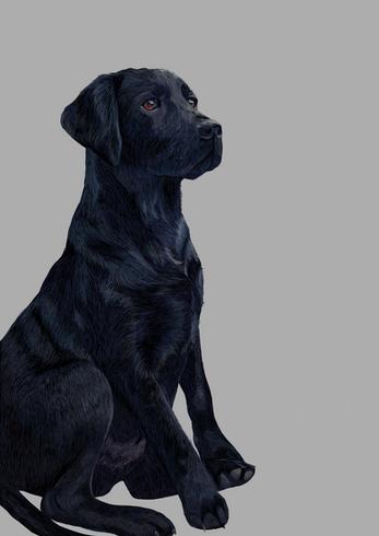 Basil the labrador