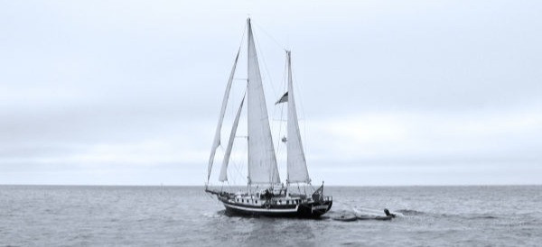 Black Wind under sail