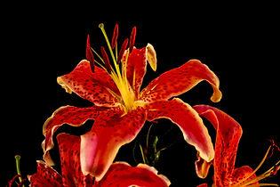 Flower FL 102.jpg
